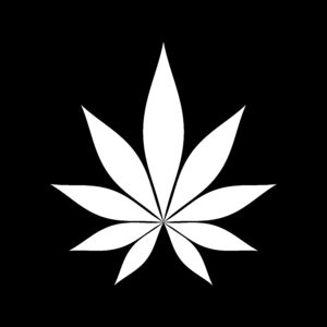 Looking for the BEST hemp flowers